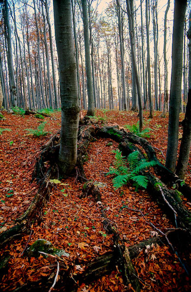 deserted_forest.jpg