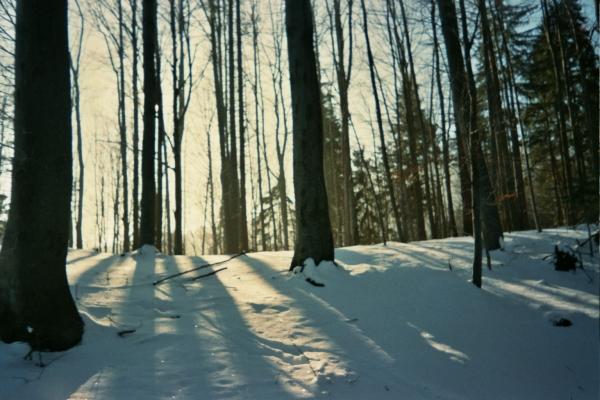sun_snow_trees.jpg