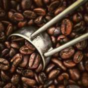 beans-coffee-fresh-2065