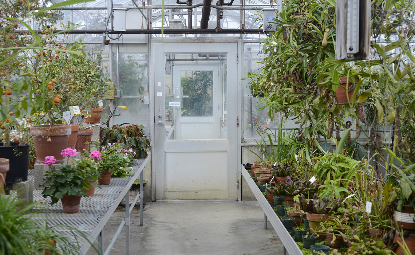 6 Things You Didn T Know About The Jordan Greenhouses