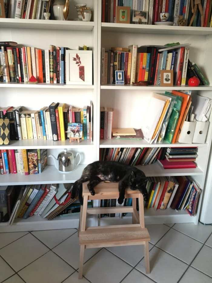Ischia and the message of cats