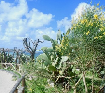 spring time in ischia