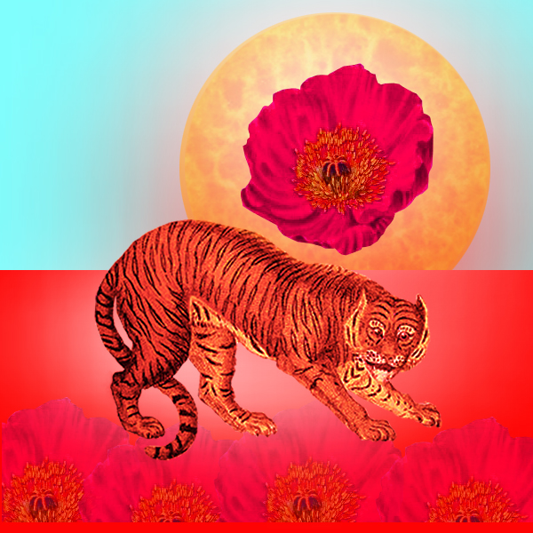 The Spiritual Meaning of the Tiger and Poppy