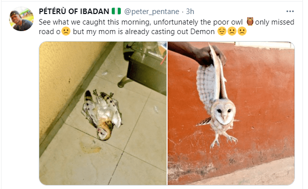 Twitter user narrates how his mother has been casting out demon from an owl that missed its way 1
