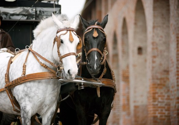 Horses & Carriage