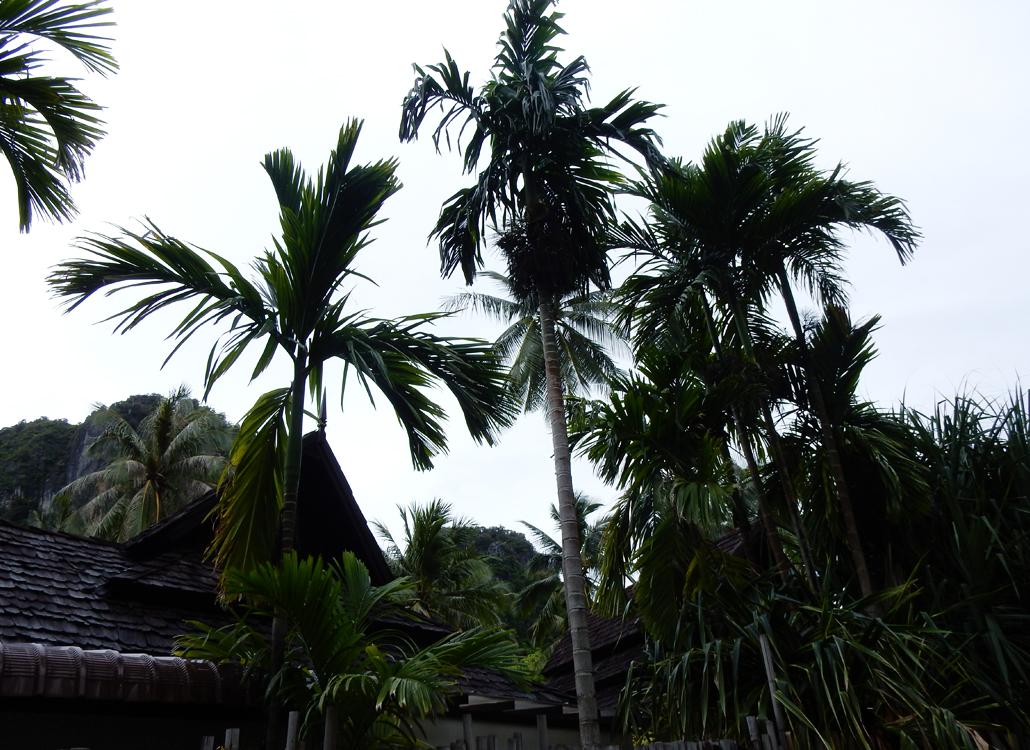 palmtree Railay Beach