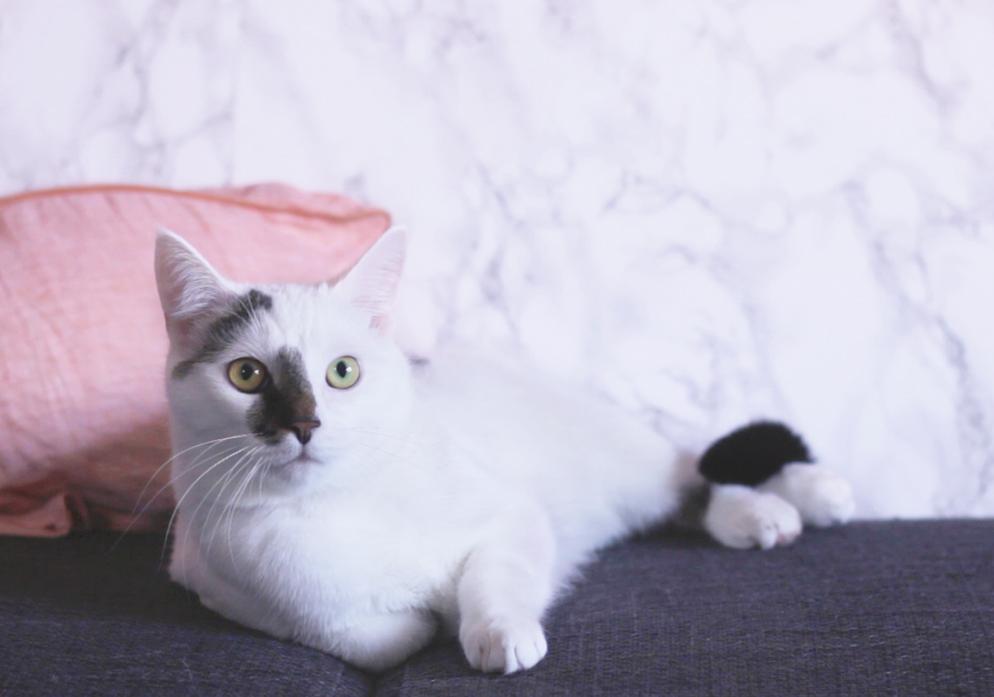kat aangereden Video | Hoe het Jip vergaat na de aanrijding én operatie