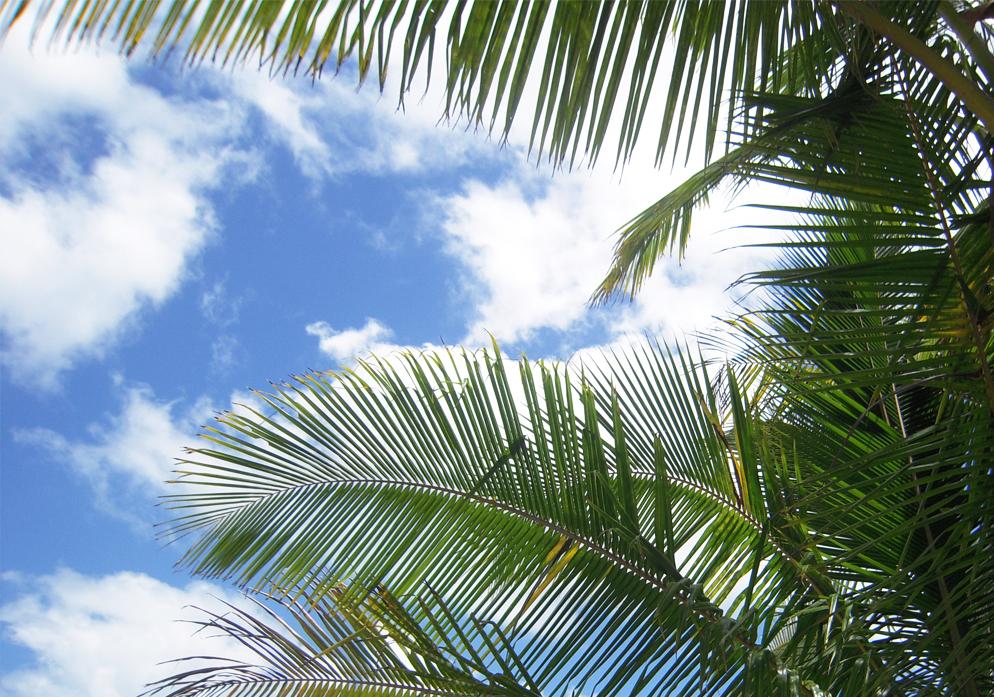 reis plannen Australië Queensland palmtrees