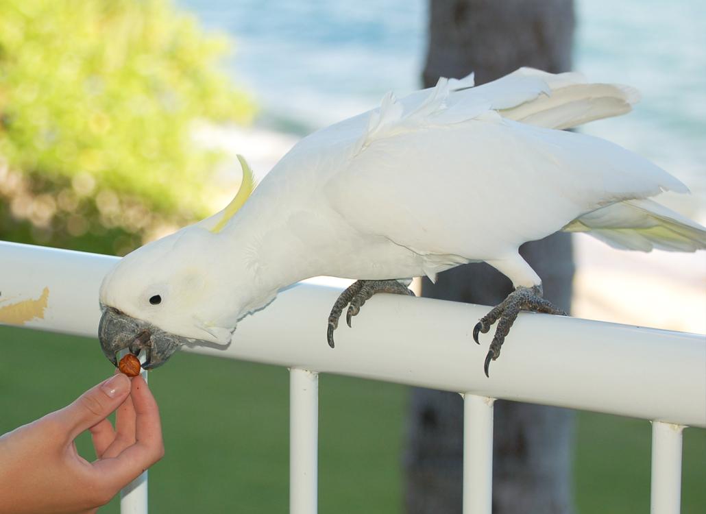 Daydream island queensland australia australië eiland the whitsundays travel report