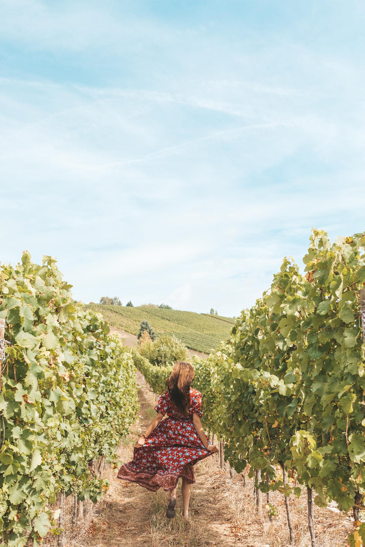Vineyard Luxembourg