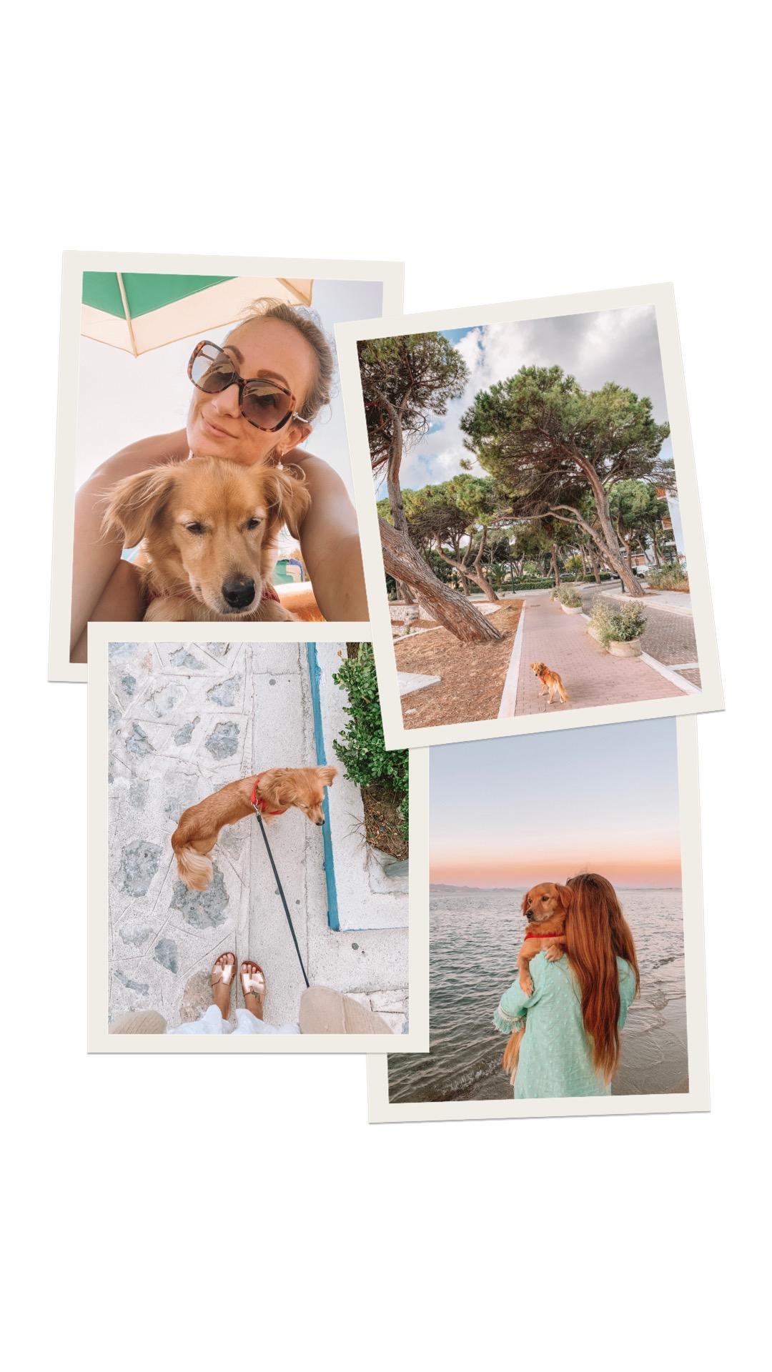 Hond adopteren Griekenland Linda's Wholesome Life