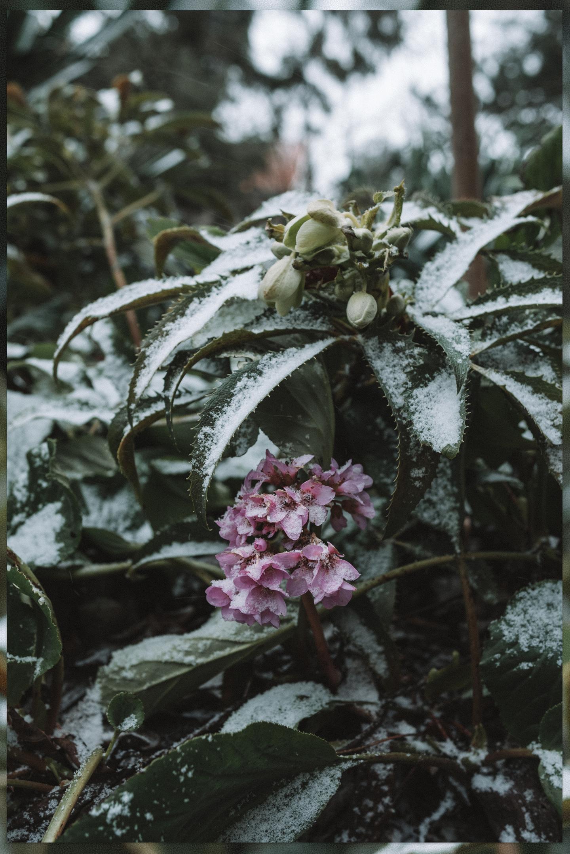 Sneeuw foto's Biesbosch planten