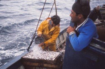 Kallt havsvatten över fisken.