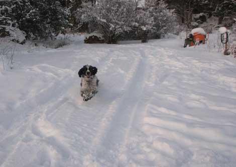 Glad jycka som ärlskar snö!