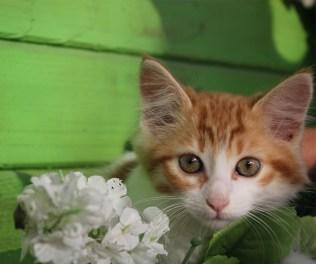 7_gatti