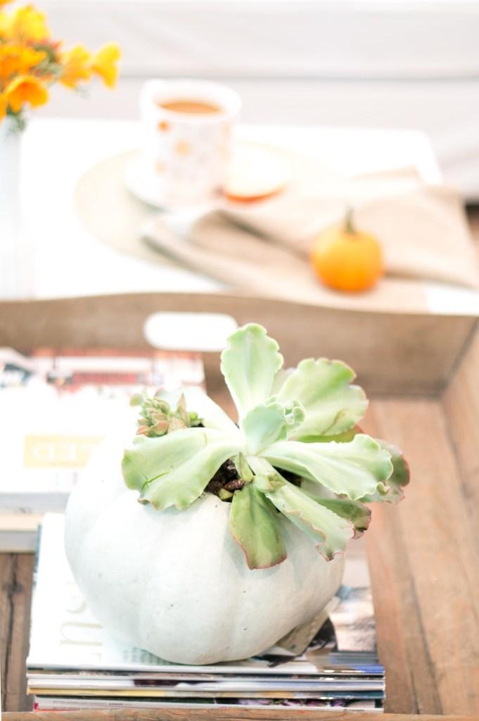 october-coffee-table-succulent in pumpkin