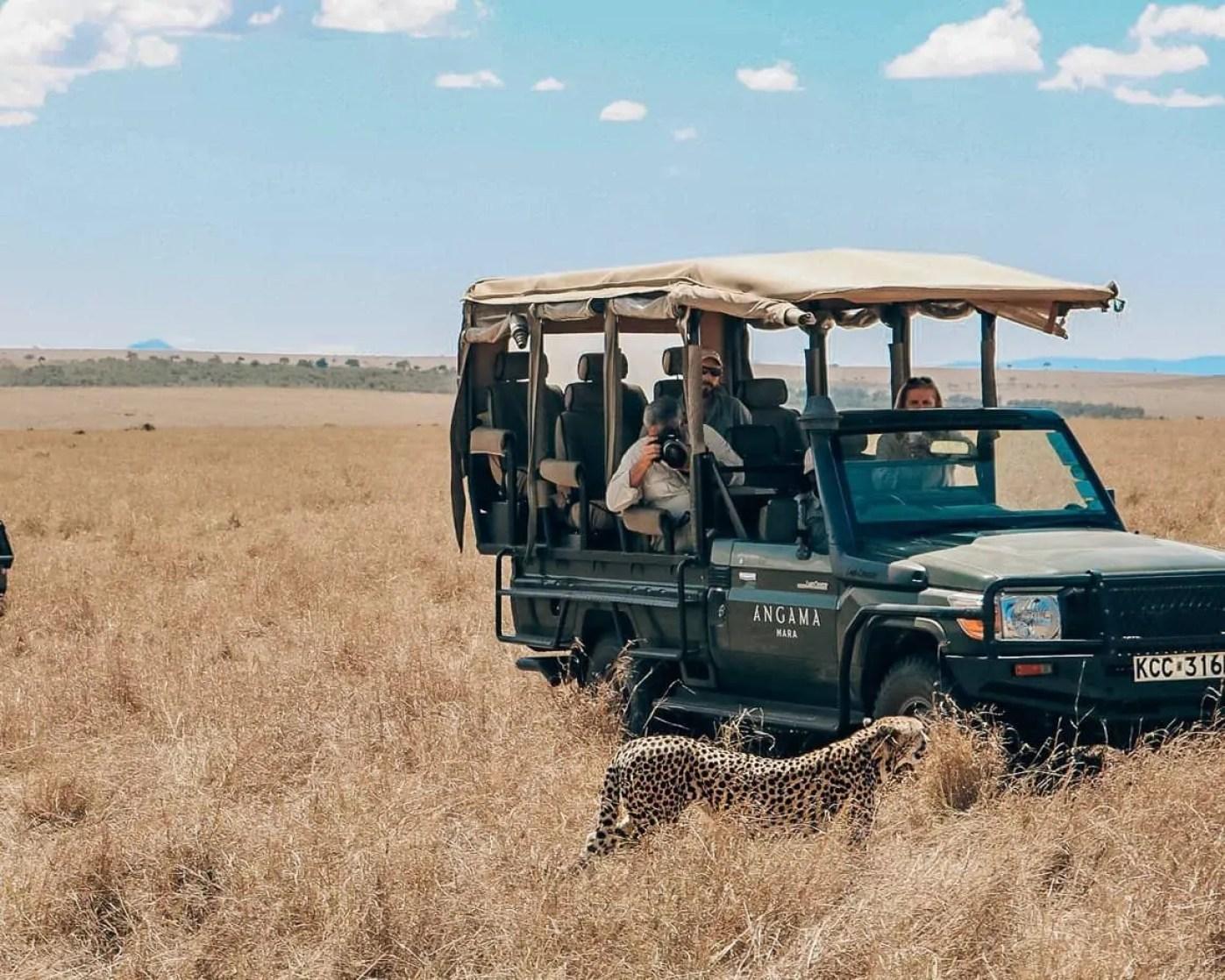 cheetah spotting safari masai marai