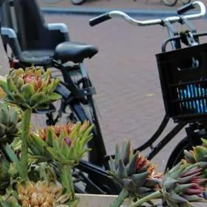 Fleurs d'artichauts et vélo