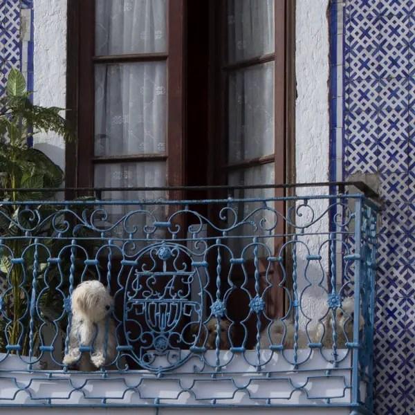 chien au balcon, belém