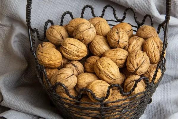 Panier de noix de l'année dans leur coque