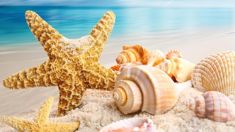 Seastar and Shells HD