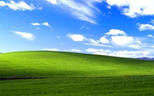 windows xp source code