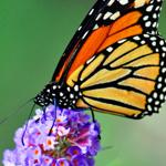 Guía de Buenas Prácticas sobre la Biodiversidad
