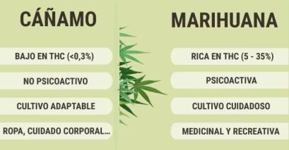 El cáñamo y la marihuana