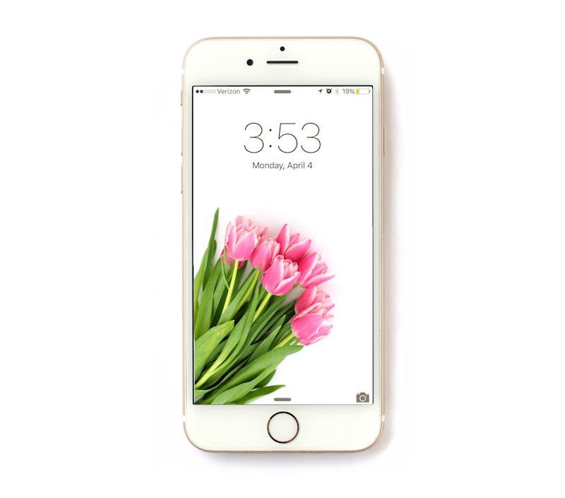 Download this beautiful tulip iPhone wallpaper for free at Lines Across