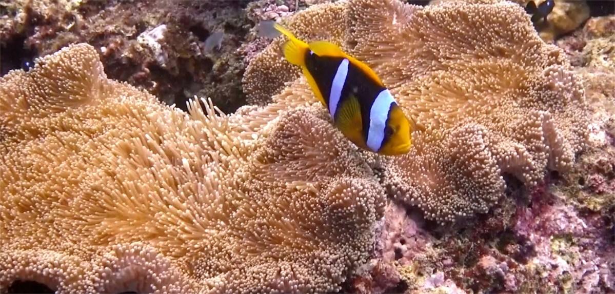 Tokoriki Island Scuba Diving & A Plea to Save Our Coral Reefs