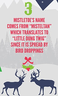 Infographie 10 Xmas facts part 3