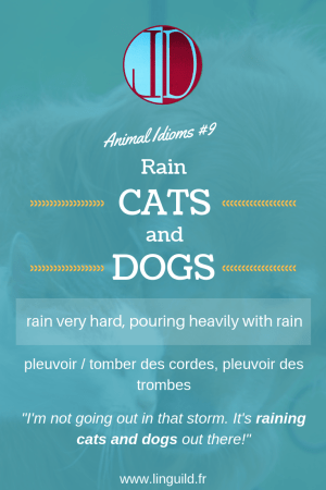 Animal idioms 9: to rain cats and dogs