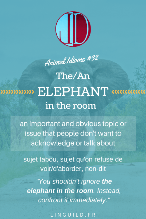 Animal idioms elephant in the room