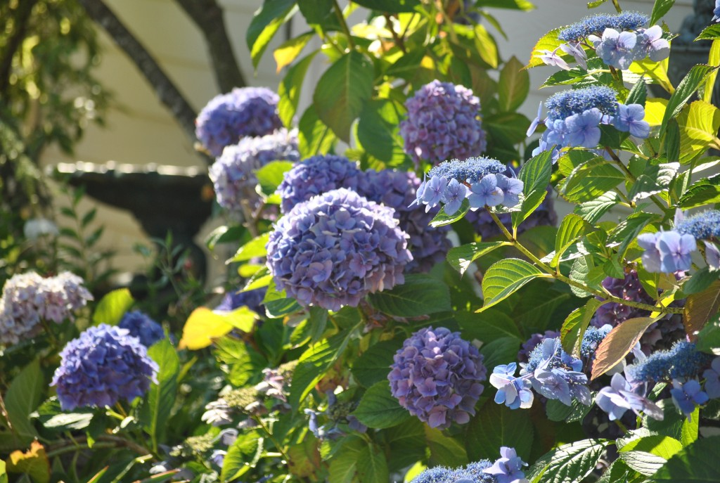 July's flowers 2014 (9)