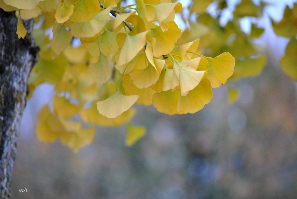 Autumn 2015 (mh) (17)