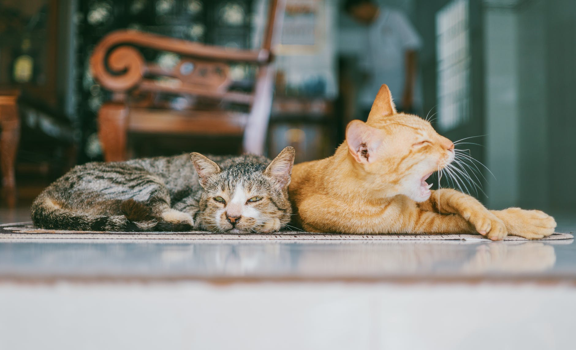 two orange and brown cats reclined on brown rug