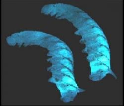 foto articolo batteri biocarburante