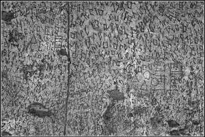foto articolo graffiti salvati