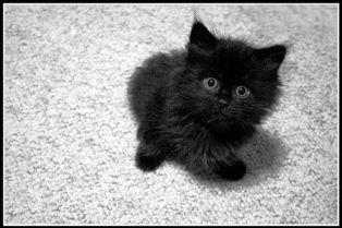 foto articolo strage gatto nero