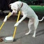 Cane che raccoglie le sue feci