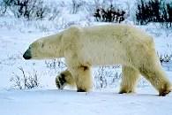 ours alice aubert