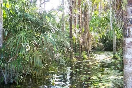 la forêt inondée de l'amazonie