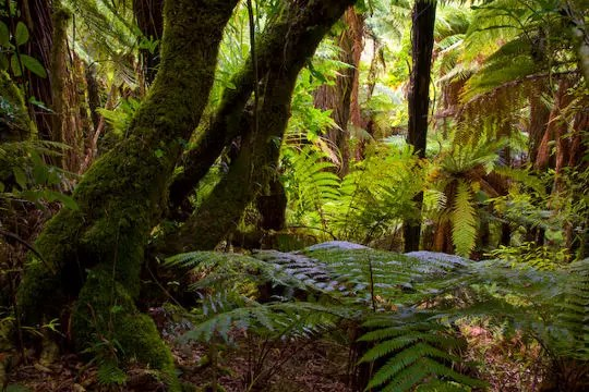https://i1.wp.com/www.linternaute.com/nature-animaux/geologie/photo/la-nouvelle-zelande-l-ode-a-la-nature/image/jungle-neo-zelandaise-338738.jpg