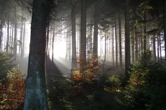 la forêt d'anlier, belgique