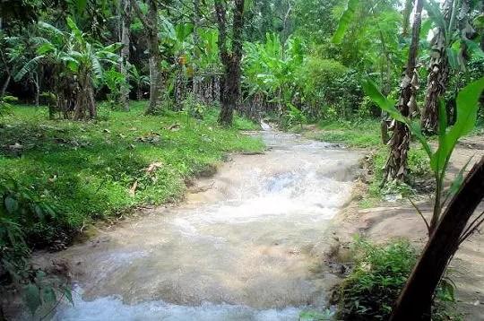 le chiapas abrite l'une des cinq grandes forêts sauvages et 10 % de tout le