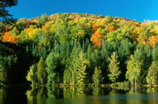 la forêt recouvre 83 % de la région des laurentides au canada. chênes et érables