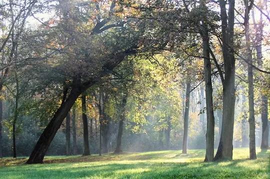 en pleine jungle urbaine, le parc de saint-cloud offre auxamoureux de