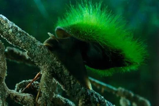 un escargot à poils verts