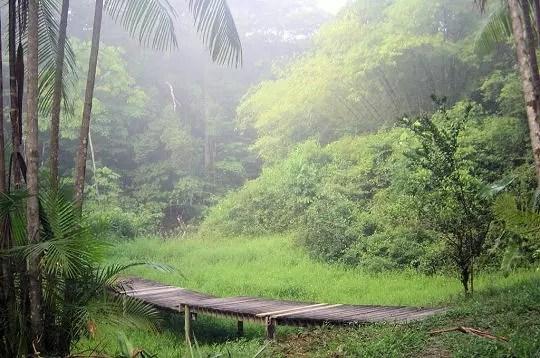 la guyane est traversée par l'amazone et la forêt amazonienne. ce territoire