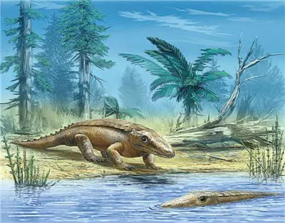 Chroniosuchus sp.
